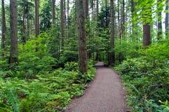Waldpfad - pazifischer Spiritus-Park Stockfotografie