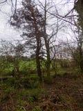 Waldrand, Crookham, Northumberland Großbritannien Lizenzfreie Stockfotos