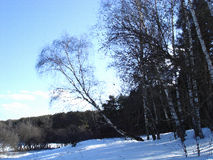 Waldrand im frühen Frühling Stockfotos