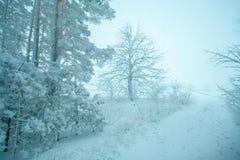 Waldrand im Winter Stockbild