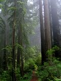 Waldrauschen Stockfotografie