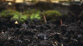 Waldregentropfengesamtlängen-Tageslicht stock footage