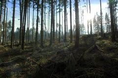 Waldreinigung mit schönem Himmel und Sonnenschein stockfoto