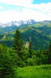 Waldreinigung am Rand eines tiefen Tales Stockfotografie