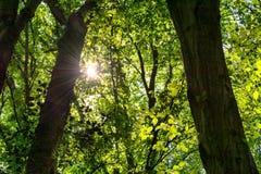 Waldschlucht in Neandertal, Deutschland Lizenzfreie Stockbilder