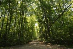Waldschotterstraße an einem sonnigen Sommernachmittag lizenzfreie stockfotos