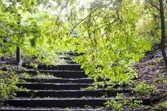 Waldschritte Stockbild