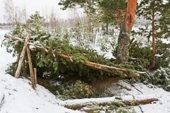 Waldschutz Lizenzfreie Stockbilder