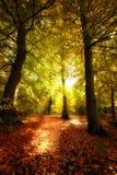 Waldsonnenaufgang im Herbst Stockfoto