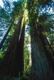 Waldsonnenlicht Lizenzfreie Stockfotografie