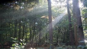 Waldsonnenlicht Ray stockbild