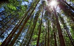 Waldsonnenschein lizenzfreies stockfoto