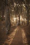 Waldsonnenuntergang Lizenzfreies Stockbild