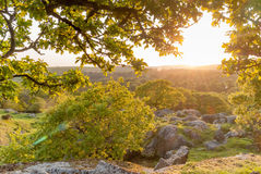 Waldsonnenuntergang Stockbild