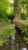 Waldspiegel stockfotos