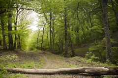 Waldspur Lizenzfreies Stockfoto