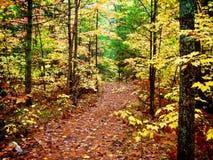 Waldspur Stockbild
