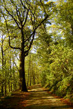 Waldspur Stockfoto
