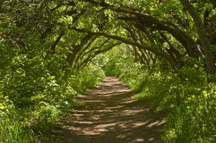 Waldspur lizenzfreies stockbild