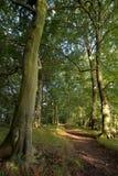 Waldspur in der Leuchte des frühen Morgens Lizenzfreie Stockfotos