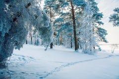 Waldspur im kalten Zeitraum Stockfotos