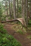 Waldspur mit Wind niedergeworfenem Baum Lizenzfreie Stockfotografie