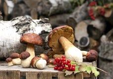 Waldsteinpilze auf Holzkiste Lizenzfreie Stockfotos