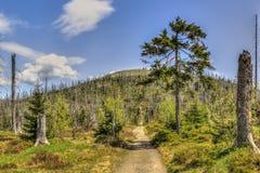 Waldsterben Stock Foto