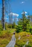 Waldsterben Stockbild