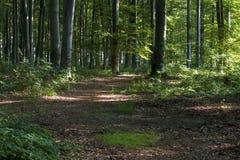 Waldstimmung lizenzfreie stockfotografie