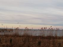 Waldstrand in Delaware lizenzfreie stockfotografie