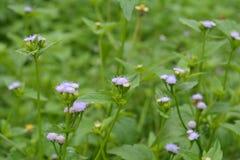 Waldstrauch mit natürlich schönen Blumen Lizenzfreie Stockfotografie