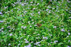 Waldstrauch mit natürlich schönen Blumen Lizenzfreie Stockfotos