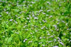 Waldstrauch mit natürlich schönen Blumen Lizenzfreie Stockbilder