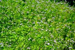 Waldstrauch mit natürlich schönen Blumen Stockbilder