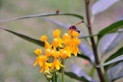 Waldstrauch mit natürlich schönen Blumen Lizenzfreies Stockfoto