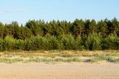 Waldstreifen auf dem Strand Stockbild