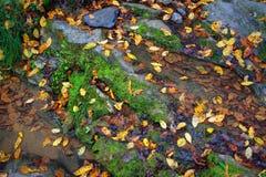 Waldstrom mit mossed Steinen und Herbstlaub Lizenzfreie Stockbilder