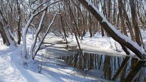 Waldstromflüsse in Landschaft die Winterwaldnatur schneien stock video footage