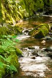 Waldstromkaskade über Moos bedeckte Felsen Lizenzfreies Stockfoto