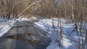 Waldstromlandschaft fließt in den Winterwaldnaturschnee, stock footage