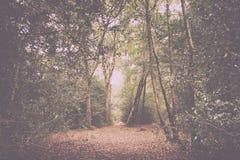 Waldszene am Anfang des Herbst Weinlese-Retro- Filters lizenzfreie stockfotografie