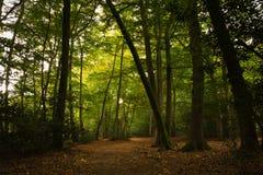 Waldszene am Anfang des Herbstes stockfotos