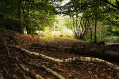 Waldszene am Anfang des Herbstes lizenzfreie stockfotografie