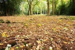 Waldszene am Anfang des Herbstes lizenzfreies stockfoto