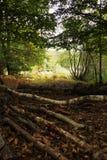 Waldszene am Anfang des Herbstes stockbild