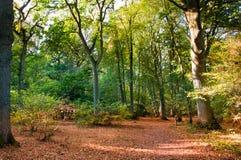 Waldszene im Herbstfall. Lizenzfreie Stockfotos