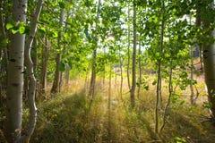 Waldszene mit drastischer Beleuchtung lizenzfreies stockbild