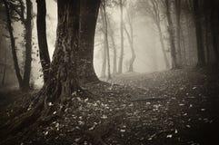 Waldszene mit einem alten Baum und Blättern aus den Grund Stockfotos