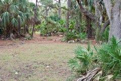 Waldszene mit einem Feld lizenzfreies stockfoto